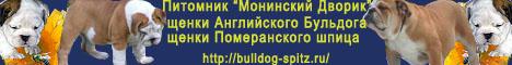 щенки Английского бульдога и Померанского шпица, питомник «Монинский дворик